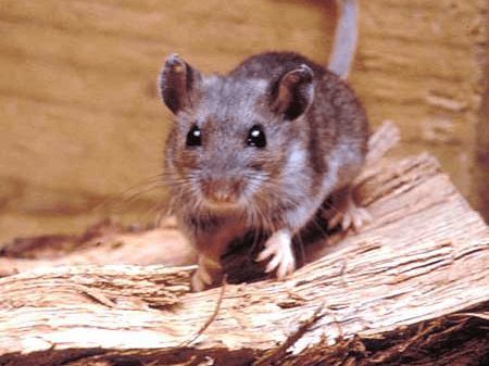 Capture and Eradicate Rodents