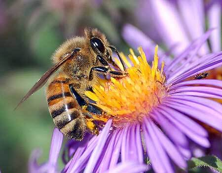 Remove Honey Bee Colonies